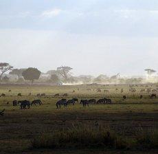 safari_600